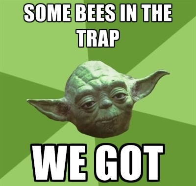 Some Bees In the Trap